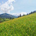 2 exklusive edle luxuriöse Landhauschalets in einer der schönsten Lagen von Fieberbrunn